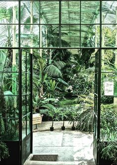 Hothouse | Jungle
