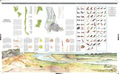 Claudia Ortiz Robles maqueta ensamble de aves  #bird, #map, #landscape, #graphic