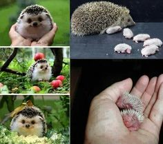 Look at those baby hedgehogs!!!!