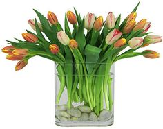Tulips in clear glass with pebbles on bottom, fold over some of the leaves inside