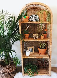 Instagram: @spencer.monk // #boho #bohemian #jungalow #eclectic #rugsusa #southwest #bright #houseplants #home #homedecor #wicker