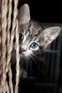 curious cat by gianni mattonai on 500px