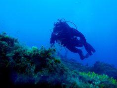 Breakdown of Diving in Greece Windsurfing, Wakeboarding, Greece Culture, Seasons In The Sun, Greece Fashion, Visit Greece, Sea Diving, Greece Holiday