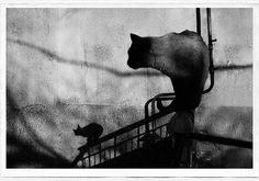 The secret world of stray cats of Kazakhstan - by Evgeniya Gor, Kazakhstani Contemporary Photography, Monochrome Photography, Black And White Photography, Street Photography, Art Photography, Cat Having Kittens, Cats And Kittens, The Secret World, Portraits