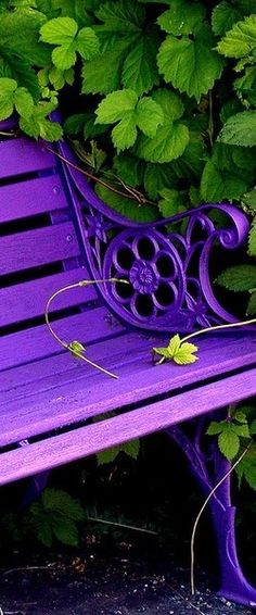If I ever have a bench in my garden I hope it looks exactly like this and that it's surrounded by greenery because green and purple go well together