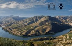 Tourism guide for planning holidays in the Douro (Portugal). Places to visit, events, routes, experiences, accommodation and wine selling. Sauvignon Blanc, Douro Portugal, Wine Tourism, Wine House, Douro Valley, Port Wine, Historical Landmarks, World Heritage Sites, Wine Tasting