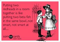 Funny Cry for Help Ecard: Putting two redheads in a room together is like putting two beta fish in the same bowl...not smart, not smart at all.....