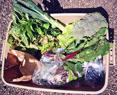 csa veggie box