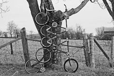 Bicycle As Art (as opposed to Bicycle as Bicycle).