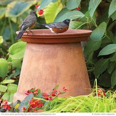 Gardening Flowers 30 Adorable DIY Bird Bath Ideas That Are Easy and Fun to Build - Do you want to attract birds to your garden? Why not provide them a space to bath? Here are 30 DIY bird bath ideas that will make a fun family project. Garden Crafts, Garden Projects, Garden Ideas Diy, Diy Garden, Easy Bird, Diy Bird Bath, Bird Bath Garden, Bird Bath Planter, Garden Birds