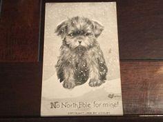 No North Pole For Mine Antique Postcard Sad Puppy Dog C Volby 1909 Copyright