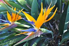 flowers - plants - photography - macro - nature - beautiful - spring - petals - colorful - bird of paradise - Dee Leone