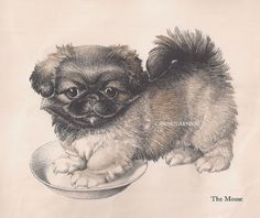 VINTAGE PEKINGESE PUPPY DOROTHY LATHROP  Art Print ILLUSTRATION  1940'S