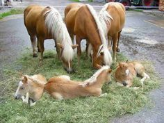 ⇔ Awww! Mothers and foals ⇔