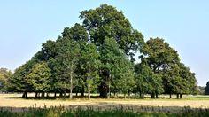 tree pyramid