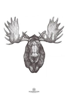 Colorado Native by Jake Weidmann, Master Penman (Cool Sketches With Quotes) Bison Tattoo, Moose Tattoo, Antler Tattoos, Head Tattoos, Tatoos, Deer Art, Moose Art, Antler Drawing, Tattoo Homme
