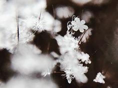 Megan Breukelman  @meganbreukelman  http://ift.tt/2mlHFh6  #macro #photography #winter #muskoka #olloclip #snowflake #winter #visualsoflife #womeninphotography #inspiration #photo #photos #pic #pics #picture #photographer #pictures #art #beautiful #photoshoot #photodaily #nature #photography @peoplescreatives #photooftheday