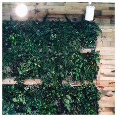 The wall of plants at @eatavo. Can I have this in my house?