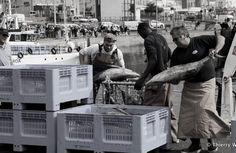 La vie du Port de pêche de La Turballe - Magayant - Déchargement et tri du thon germon