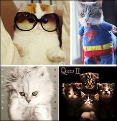 Madonna Cat! *-*