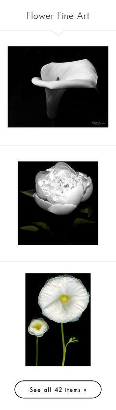 """Flower Fine Art"" by posters-print ❤ liked on Polyvore featuring posters, home, home decor, wall art, colorful home decor, colorful wall art, friends poster, photo poster and photo wall art"