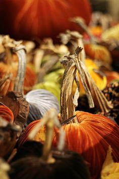 Velvet Pumpkins from LoveFeast Shop www.lovefeastshop.com