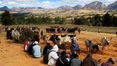 Marché aux zébus, Ambalavao, Madagascar