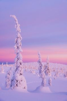 EarthPorn is your community of landscape photographers and those who appreciate the natural beauty of our home planet. Winter Christmas, Xmas, Holiday, Lapland Finland, Snow Covered Trees, National Photography, Winter Photography, Beauty Photography, Winter Landscape