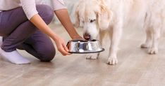 Want Your Dog to Live Longer? What your dog eats is directly connected to his physical and mental health. A dog with a poor diet may show signs of digestive issues, dull coat, allergies, and even behavior issues. Types Of Dog Food, Different Types Of Dogs, Dog Food Reviews, Sick Dog, Crazy Dog Lady, Best Dog Food, Dog Eating, Pet Life, Books To Buy