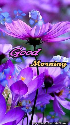 Pin On Good Morning Shayari