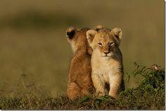 wildlife - Google Search