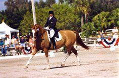How Do I Help My Stiff Horse Bend?