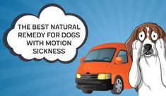 Car rides are awful for pups who suffer from motion sickness. To relieve their nausea a bit, check out this list of natural remedies and solutions. Natural Nausea Remedies, Skin Care Remedies, Home Remedies, Vestibular System, Motion Sickness, Dog Treats, Your Pet, Pup, Good Things