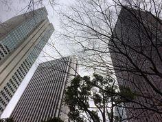 今週はお天気が悪く明日は大荒れとか春が待ち遠しいと恨めしく空を見る#shinjuku #tokyo
