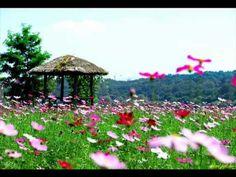 꽃밭에서 (정훈희)