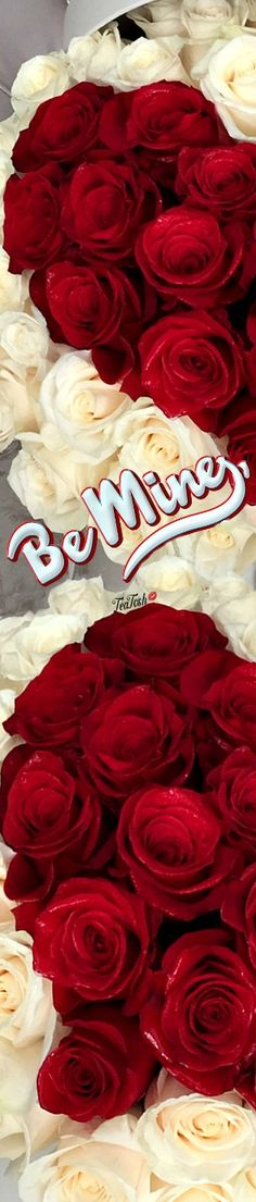 ❈Téa Tosh❈ My Red Valentine #teatosh 16b Who Do You Love, Box Roses, Vip Group, Love My Family, Romantic Dinners, Be My Valentine, Heavenly, Equestrian, Bouquets