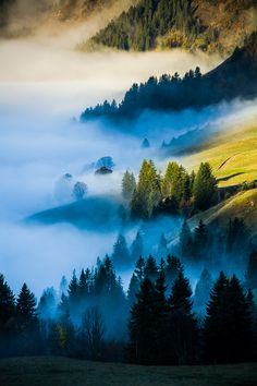 ~~Brumes | conifer trees and misty hills | by Vincent Favre~~