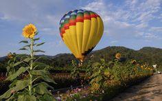 hot air balloon ride in napa