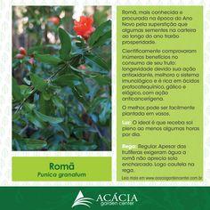 140805-roma-como-cuidar-curiosidades-plantas-jardinagem-paisagismo-acacia-garden-center