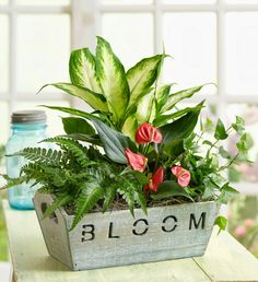 Shop for a selection of plants that make excellent plant gifts or will beautifully furnish your home or office! Our plant delivery is quick and easy and perfect for any occasion. Send plants and potted trees online like bonsai, orchids, & more. Succulents Garden, Garden Plants, Indoor Plants, Planting Flowers, House Plants Decor, Plant Decor, Container Plants, Container Gardening, Get Well Flowers