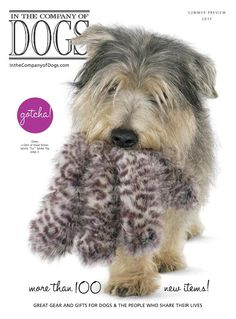 Oliver, a Glen of Imaal Terrier, on the front cover of the 'In the Company of Dogs' summer 2011 catalog!
