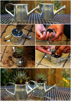 Watering can succulents for gifts or favors