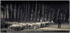 #Karoo Sheep Afrikaans, My World, South Africa, Sheep, Blood, Landscapes, Scenery, Photos, Spaces