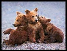 Grizzly bear cubs - pg.43  Controlla su http://www.zenoarte.com/stampe-poster-roma/ i formati in cui può essere stampata
