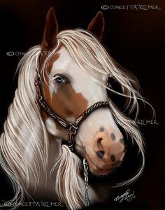 Soul Seeker - Paint Mare - Horse Art - Open Edition Art Print 14 X 11 on Etsy, $16.21 CAD