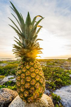 Free pineapple photography as one way we try to spread good vibes and make positivity louder. Come check us out and say hi!