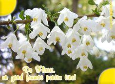 Felicitare de Florii cu mesajul De Florii, un gand frumos pentru tine!