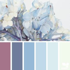 today's inspiration image for { hydrangea hues } is by @traceybolton ... thank you Tracey for another inspiring #SeedsColor image share! by designseeds