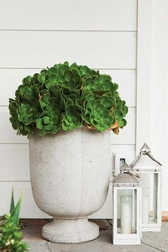 "One container filled to the brim with a single type of plant can have major impact beside the front door. Apple-green ""dinner plate"" Aeonium urbicum fills this textured white urn with a mound of the flowerlike rosettes, resembling a bouquet."