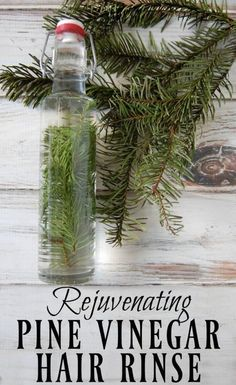 Start hunting down those pine needles! This rejuvenating pine vinegar hair rinse will be your new favorite way to condition your hair! Great for dandruff, eczema, psoriasis, and adding shine to hair. #pine #hairrinse #fir #conditioner #vinegarrinse #haircare Vinegar Hair Rinse, Vinegar For Hair, Beauty Care, Diy Beauty, Beauty Skin, Beauty Tricks, Homemade Beauty, Beauty Ideas, Beauty Secrets